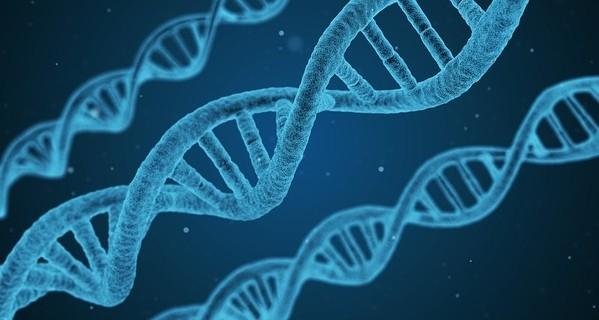 DNA strands. (Image from Pixabay)