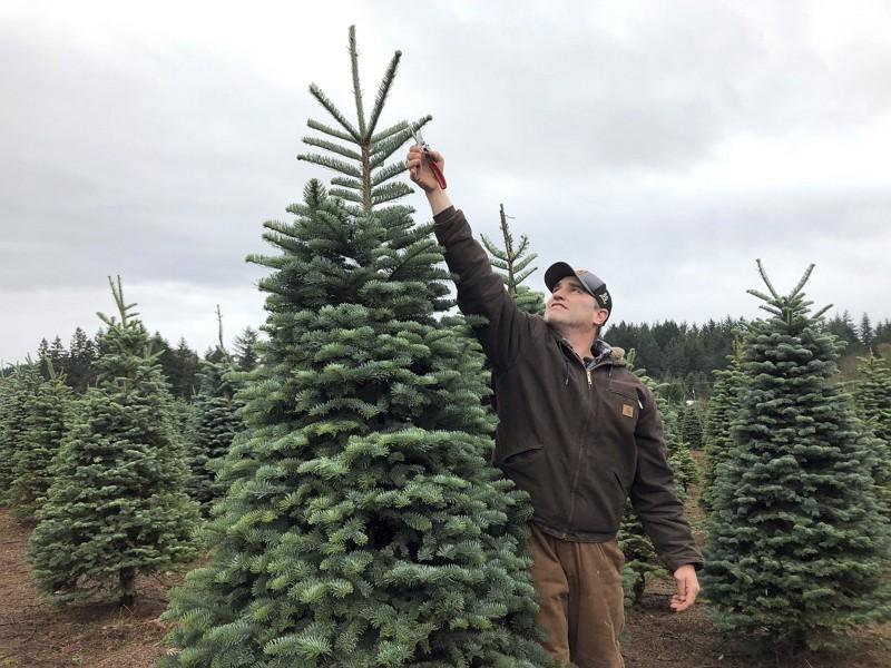 奧勒岡州聖誕樹農(圖/美聯社)