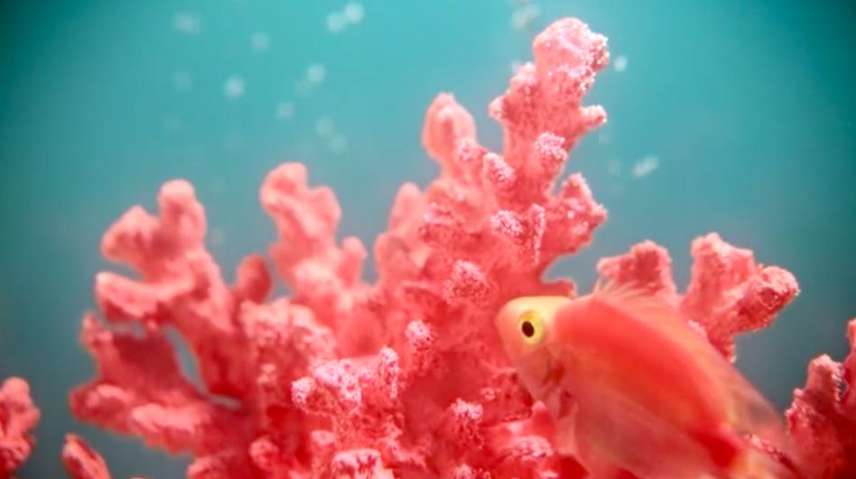 人們渴望被療癒!Pantone選出2019年代表色:活珊瑚色(圖/Pantone)