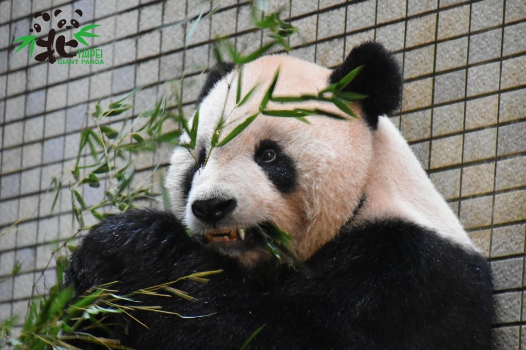 照片由台北市立動物園提供