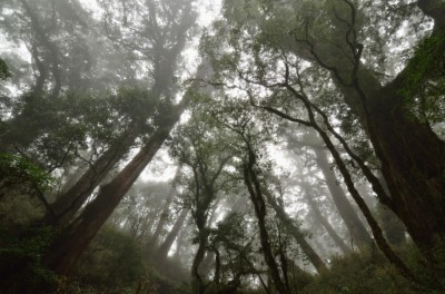 紅檜巨木群。(照片由臺東林管處提供)