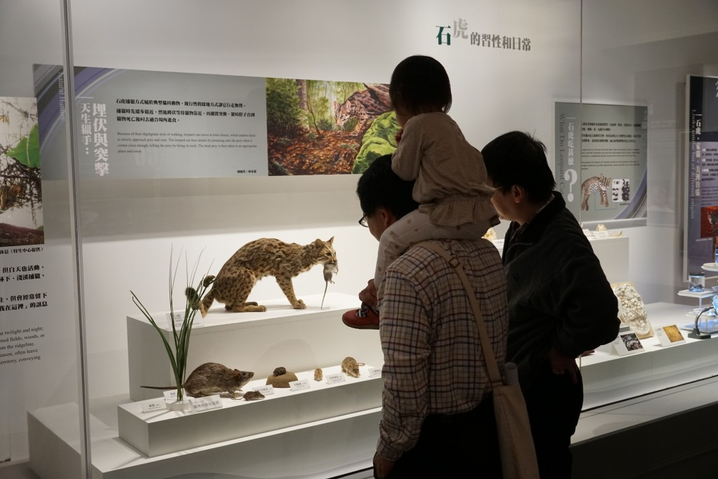 "The exhibition ""Realm of the Leopard Cat"" opens on Dec. 26 at the National Museum of Natural Science (Source: NMONS)"