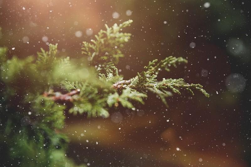 聖誕樹(圖/Pixabay)