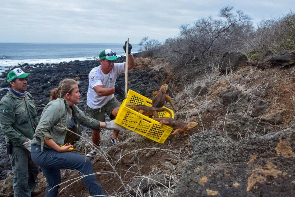 圖片來源:Parque Nacional Galápagos Facebook
