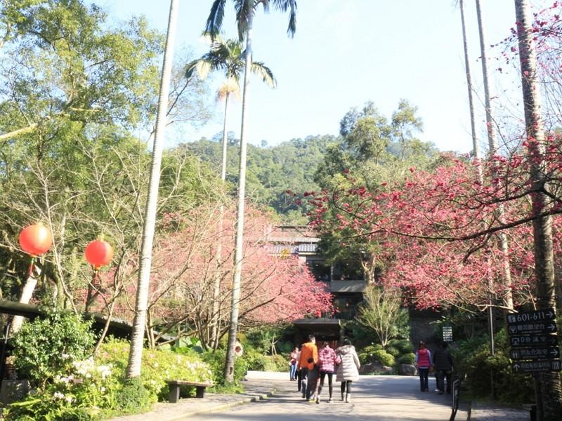 大板根森林溫泉酒店 春遊趣住房&情人櫻花餐