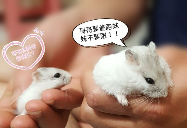 Hamsters adopted by couple. (Photo from Chang's Facebook page)