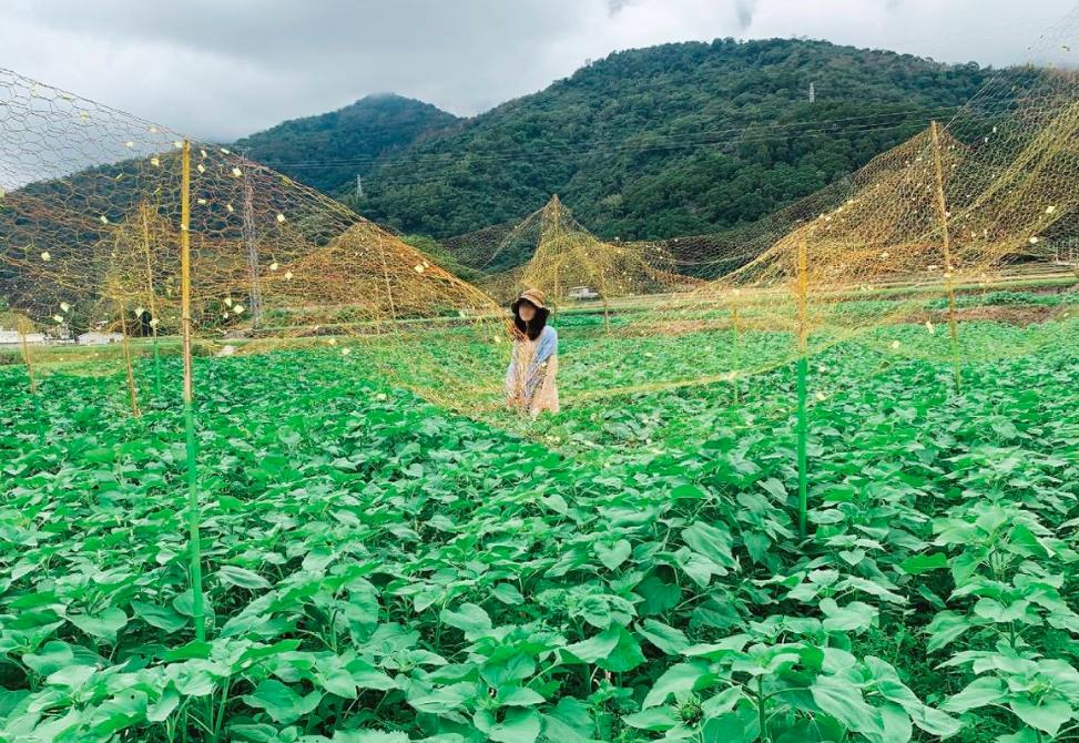 台灣農產品去年總出口額破紀錄(圖/農委會)