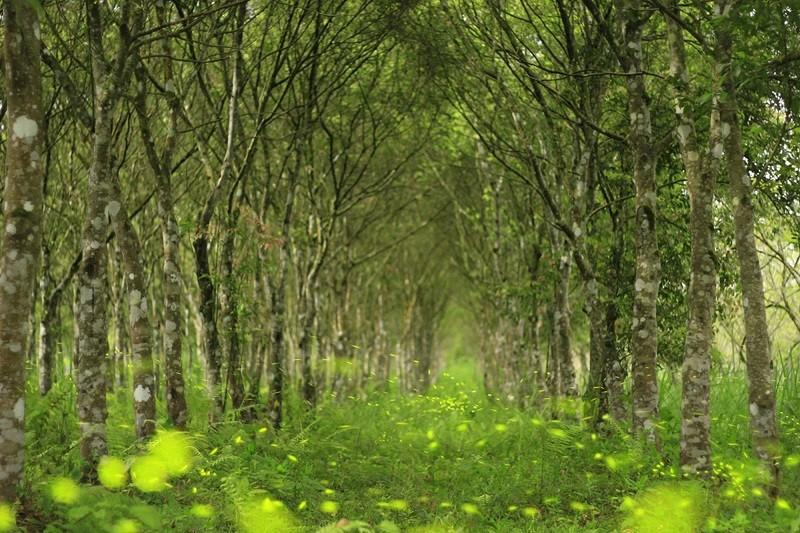(photo courtesy of Forestry Bureau)