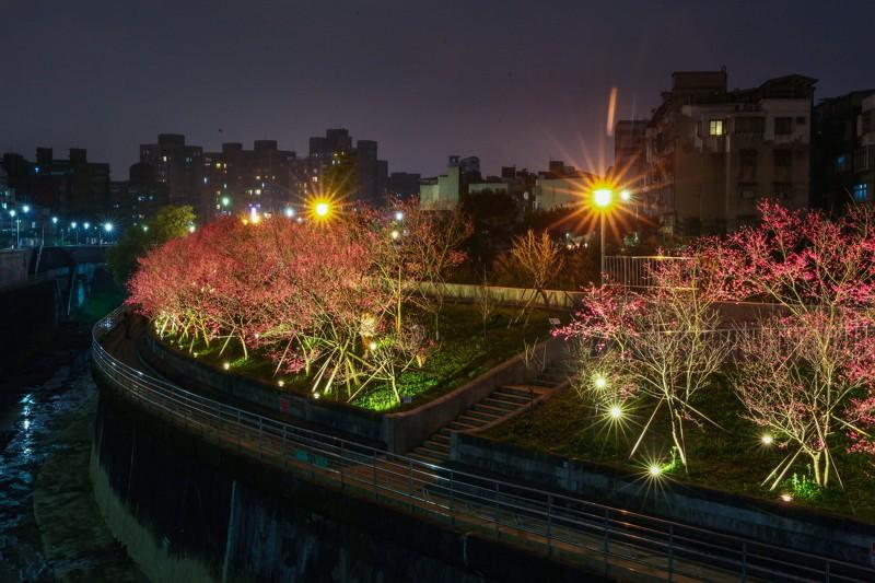 樂活公園夜櫻(圖/公園處)