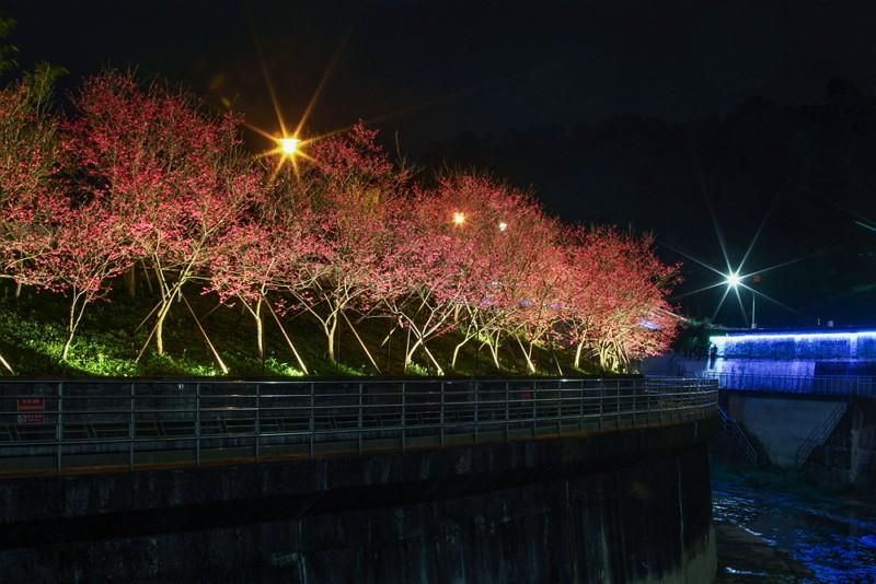 北市樂活公園 夜櫻浪漫登場