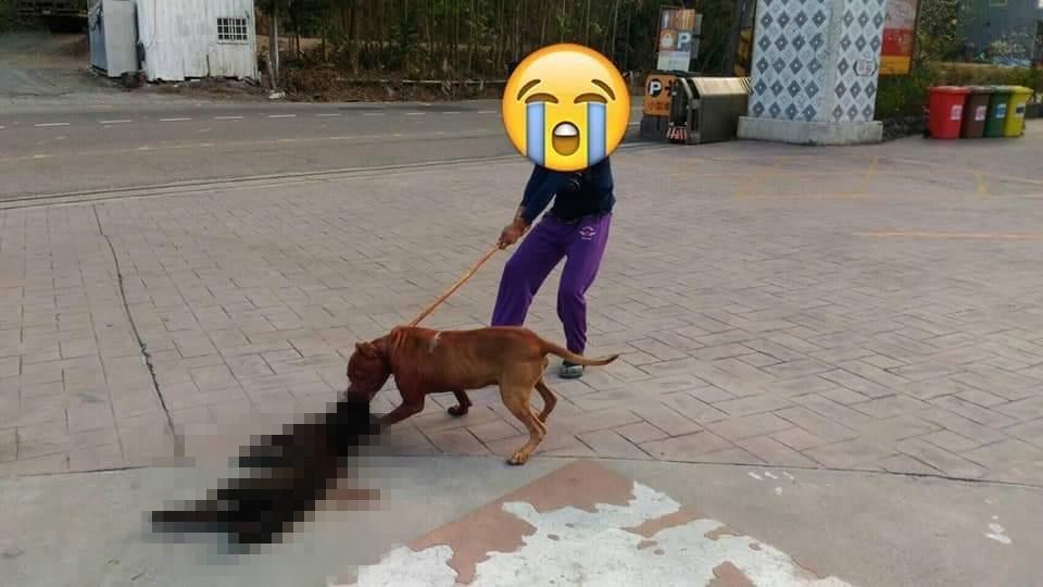 Bystander hits pit bull with stick. (Image from Facebook group 爆料公社)