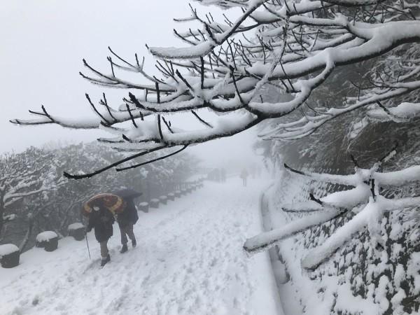 Snow on Yangmingshan last year.