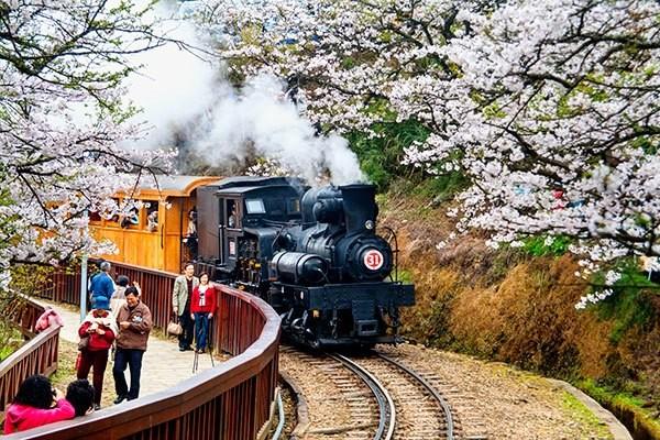 Alishan steam locomotive.