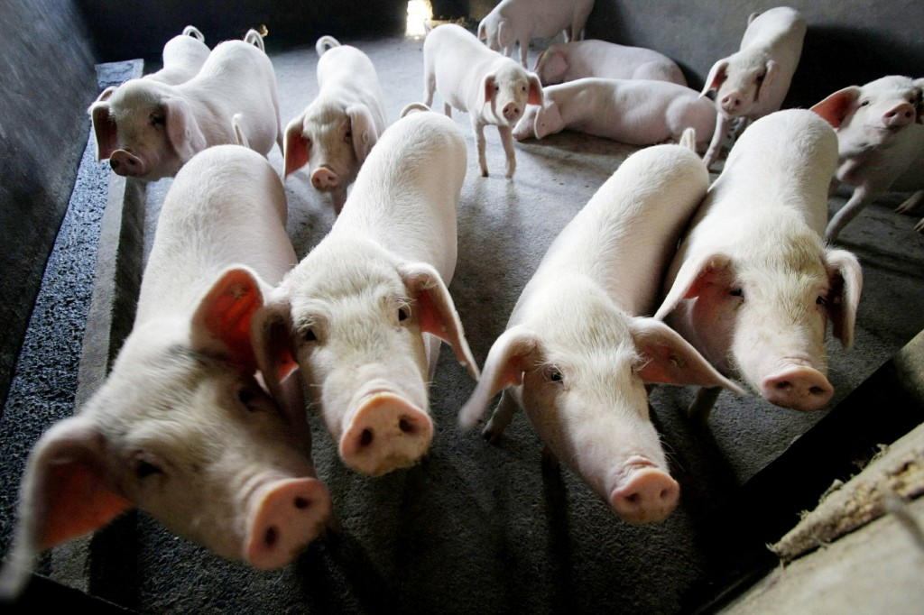 African Swine Fever expands into Xinjiang.