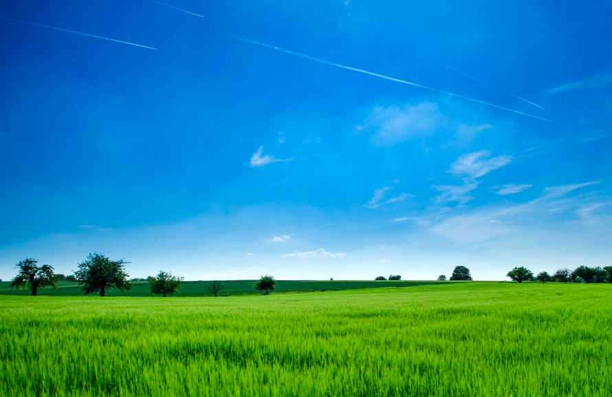 「西羅亞自然生態農場」助弱勢(示意圖/pexels)