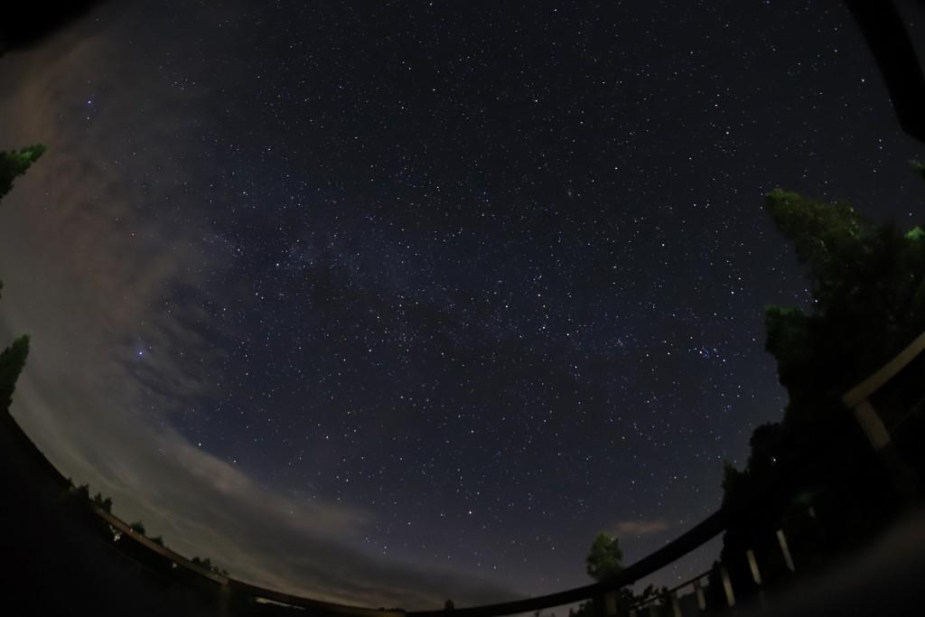 小笠原山的滿天星。(照片由林務局提供)