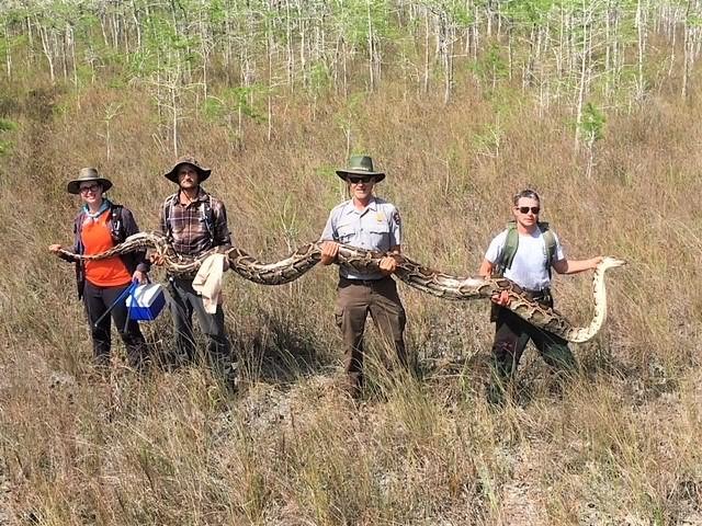 照片轉載自Big Cypress National Preserve Facebook