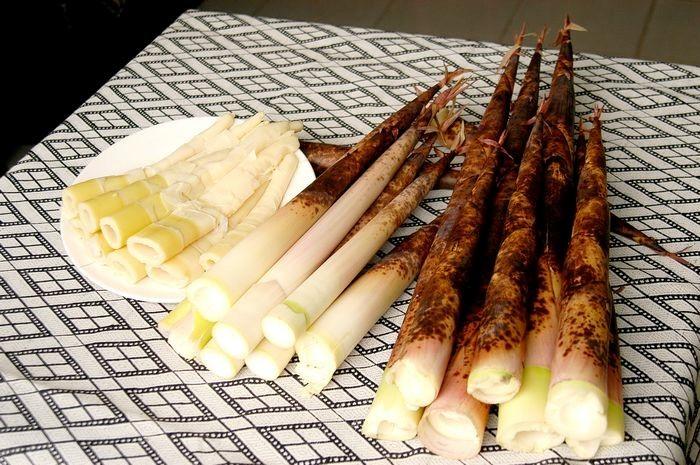 桂竹筍。(照片由農糧署提供)