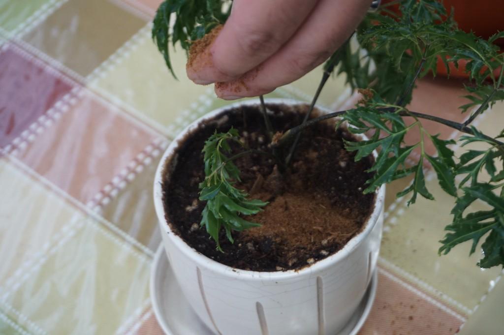 堆肥可用來種植盆栽。(照片由環保署提供)