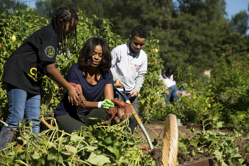 FILE - In this Oct. 6, 2015, file photo, first lady Michelle Obama, joined by school children from Washington area, pick sweet potatoes...