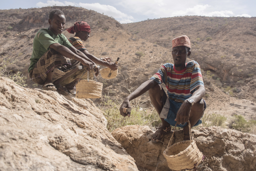 In this Tuesday, Aug. 2, 2016 photo, frankincense tree tappers sit in a canyon with their scrapers and baskets near Gudmo, Somaliland, ...