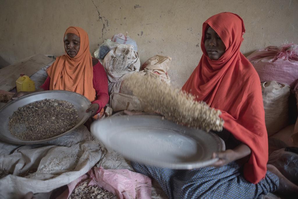 In this Saturday Aug. 6, 2016, photo, women sort raw frankincense gum in Burao, Somaliland, a breakaway region of Somalia. These last w...