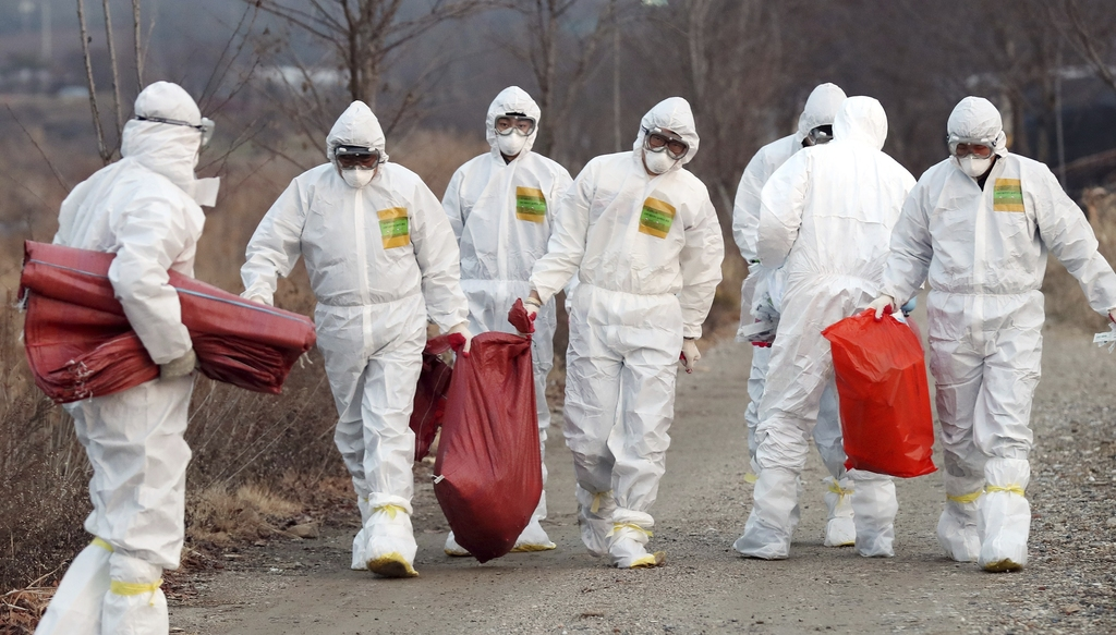 In this Monday, Dec. 26, 2016 photo, health officials wearing protective suits carry a sack containing killed chickens after they were ...