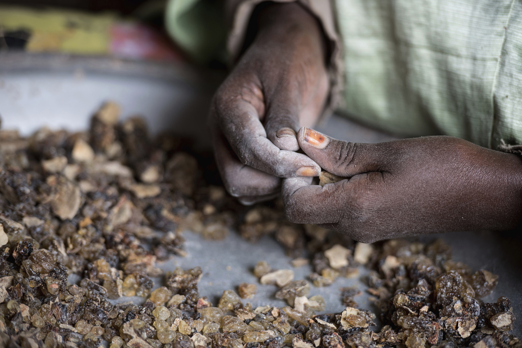 In this Saturday, Aug. 6, 2016 photo, a woman sorts raw frankincense gum in Burao, Somaliland, a breakaway region of Somalia. The last ...