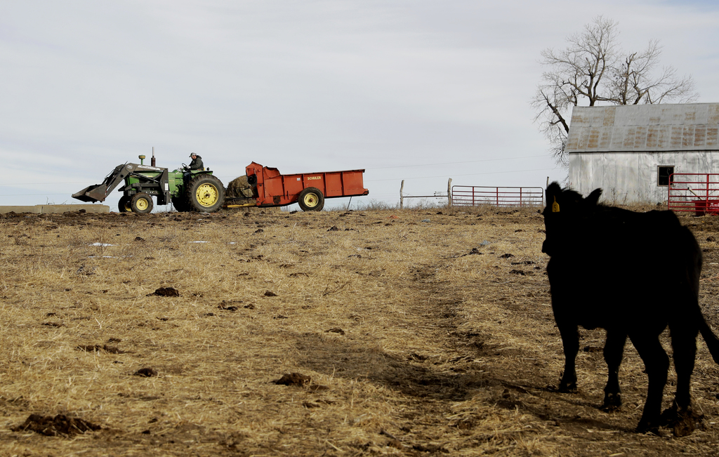 In this photo taken Wednesday, Dec. 21, 2016, Matt Ubell brings feed to his cow herd on his farm near Wheaton, Kan. Ubell is one of man...