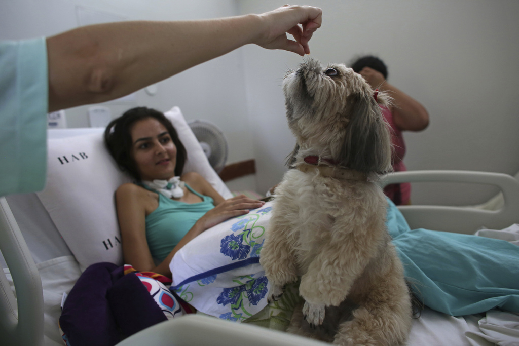 In this Nov. 17, 2016 photo, 20-year-old patient Gleisiane Oliveira watches Shitzu dog named Mille be given a treat on her bed at the S...