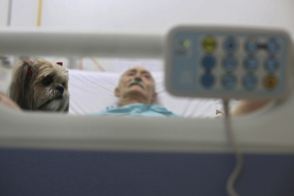 In this Nov. 17, 2016 photo, Antonio Araujo, a 67-year-old geriatric patient, gets a visit from a Shitzu dog named Mille as he rests in...