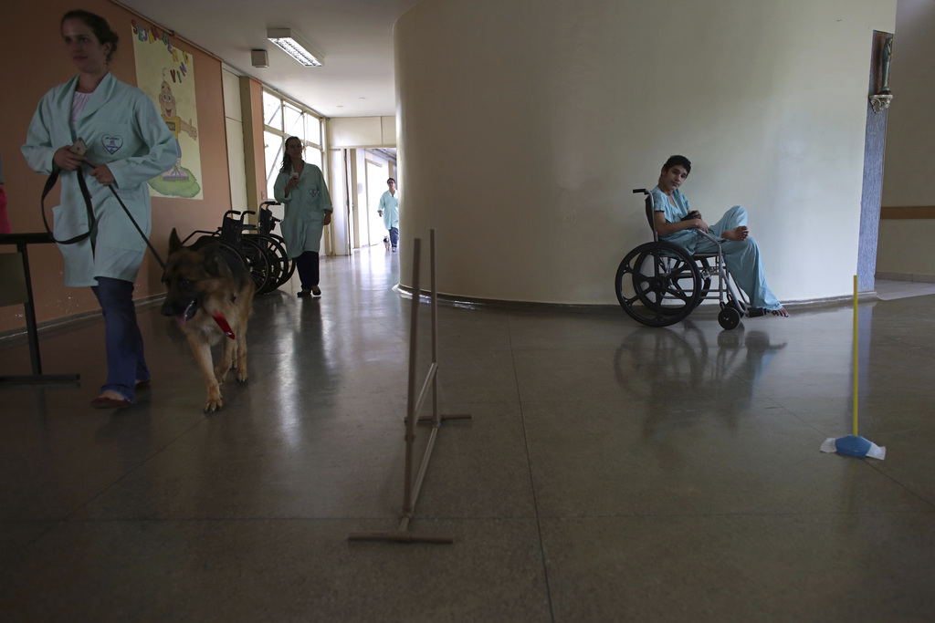 In this Nov. 17, 2016 photo, Priscila Cremer walks a German shepherd named Pacato to visit another patient as they make their rounds as...