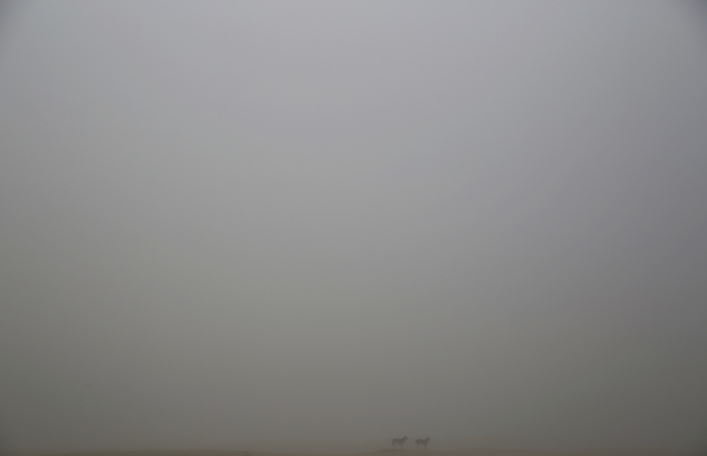 Two dogs stand atop a dune in a foggy desert on the outskirts of Dubai, United Arab Emirates, on Saturday, Dec. 31, 2016. A heavy, seas...