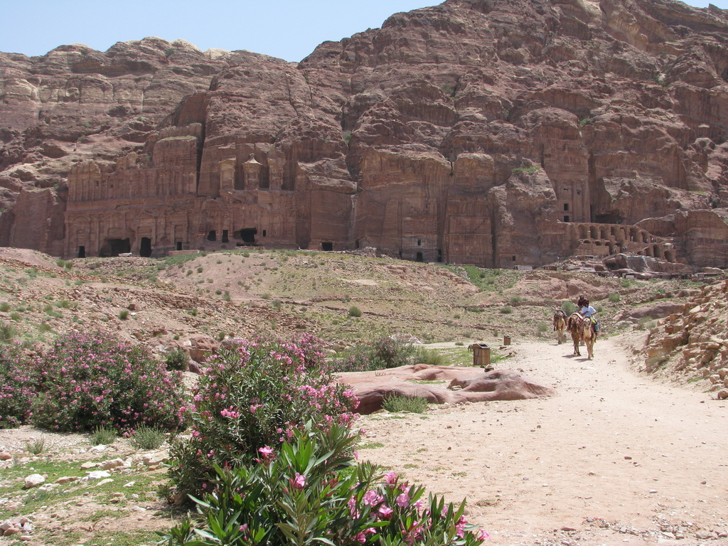 This April 23, 2016 photo shows camels against a panorama of the Royal Tombs in the ancient city of Petra, Jordan. This Middle Eastern ...