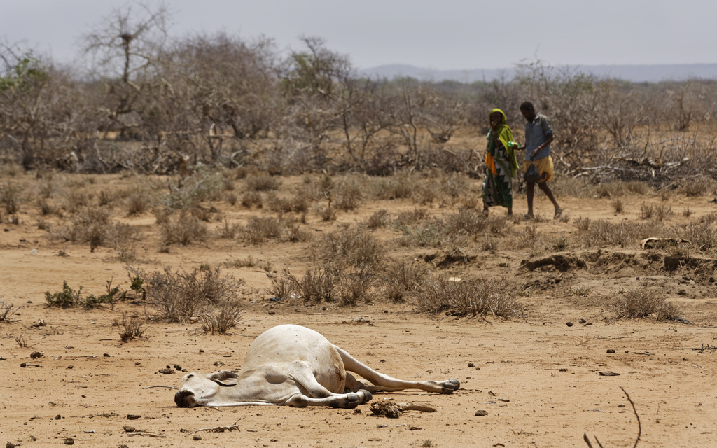 Villagers walk past the carcass of a dead cow in the drought-affected village of Bandarero, near Moyale town on the Ethiopian border, i...