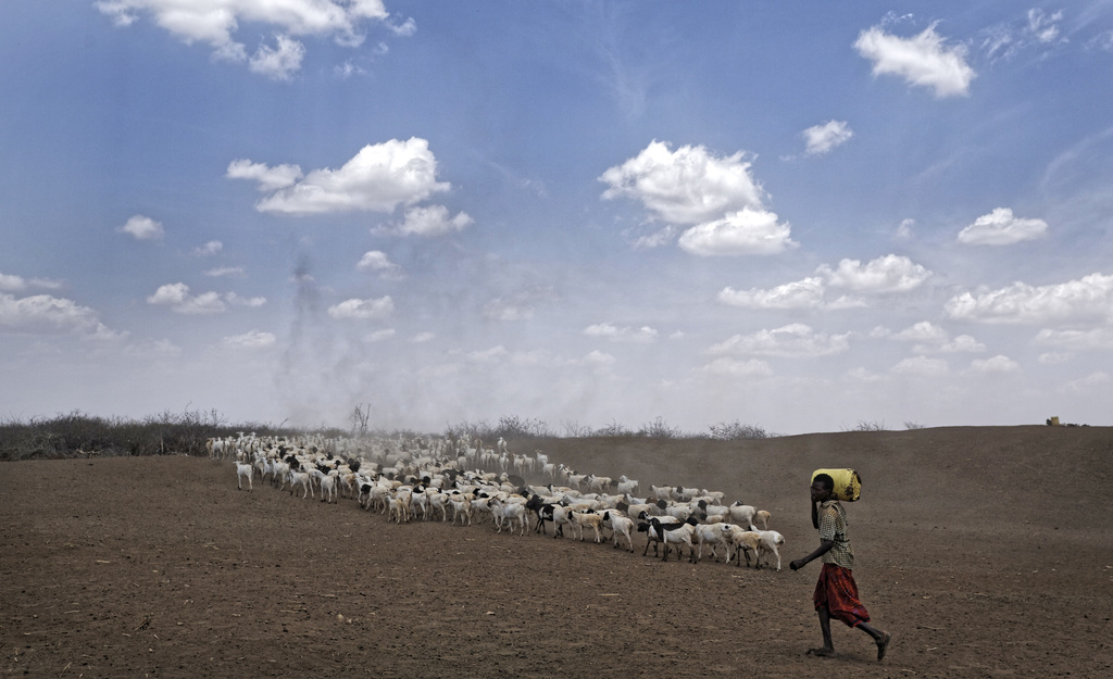 A herder drives his animals away after watering them at one of the few watering holes in the area, near the drought-affected village of...