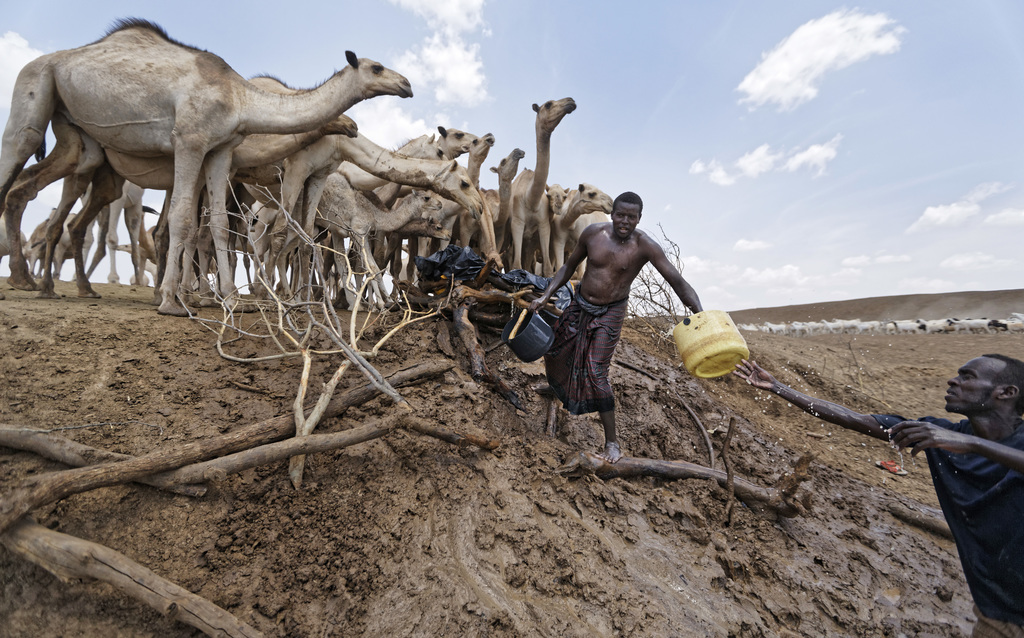 Camel herders scoop up water in plastic buckets from one of the few watering holes in the area, to water their animals near the drought...