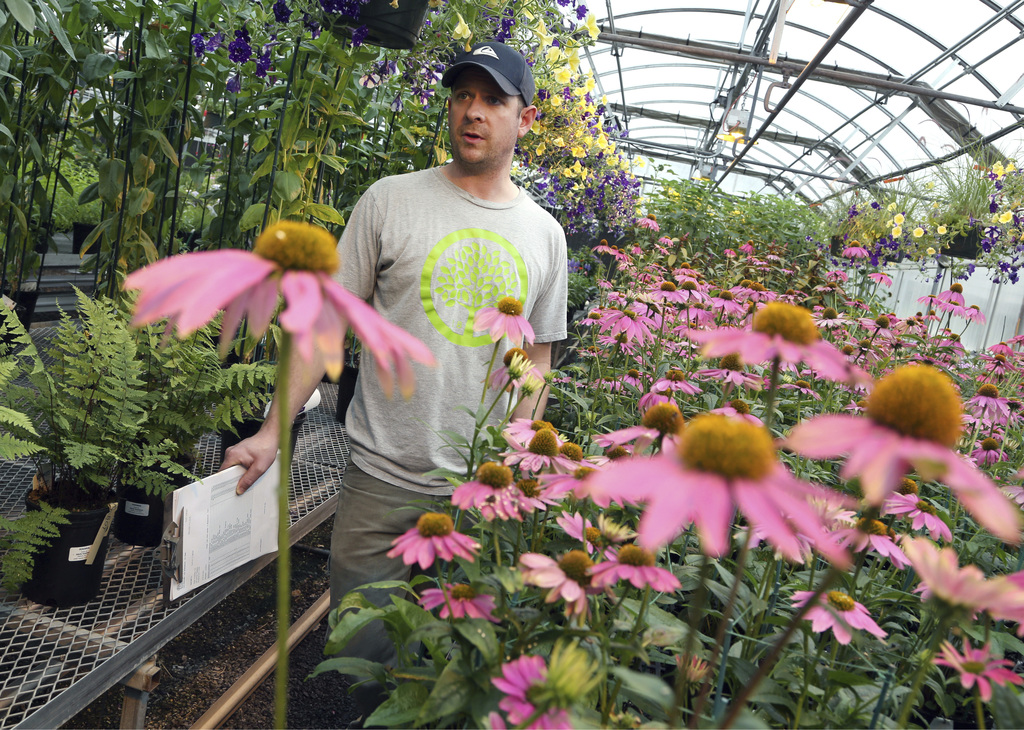 In this Wednesday, March 1, 2017, photo, head grower Nathan Roehrich stands while speaking in a greenhouse where plants are growing for...