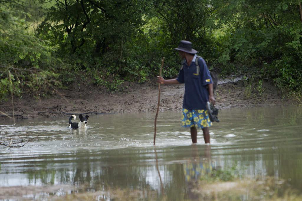 A man stops to check on his dog while crossing a flooded road in Tsholostho about 200 kilometres north of Bulawayo, Saturday, March 4, ...