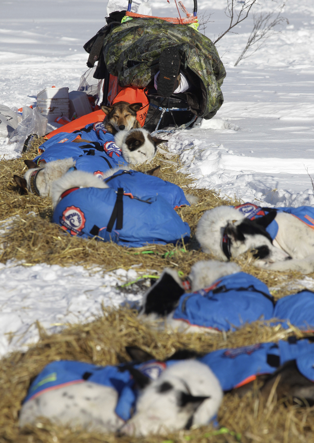 Norwegian musher Ralph Johannessen rests in his sled at the Manley Hot Springs checkpoint of the Iditarod Trail Sled Dog Race in Manley...