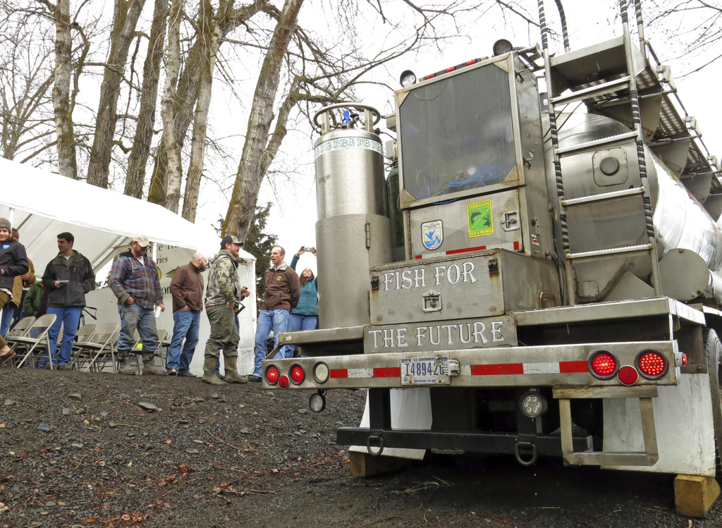 In this Thursday, March 9, 2017 photo, a water tanker truck holding hundreds of baby coho salmon arrives at the Lostine River in Wallow...