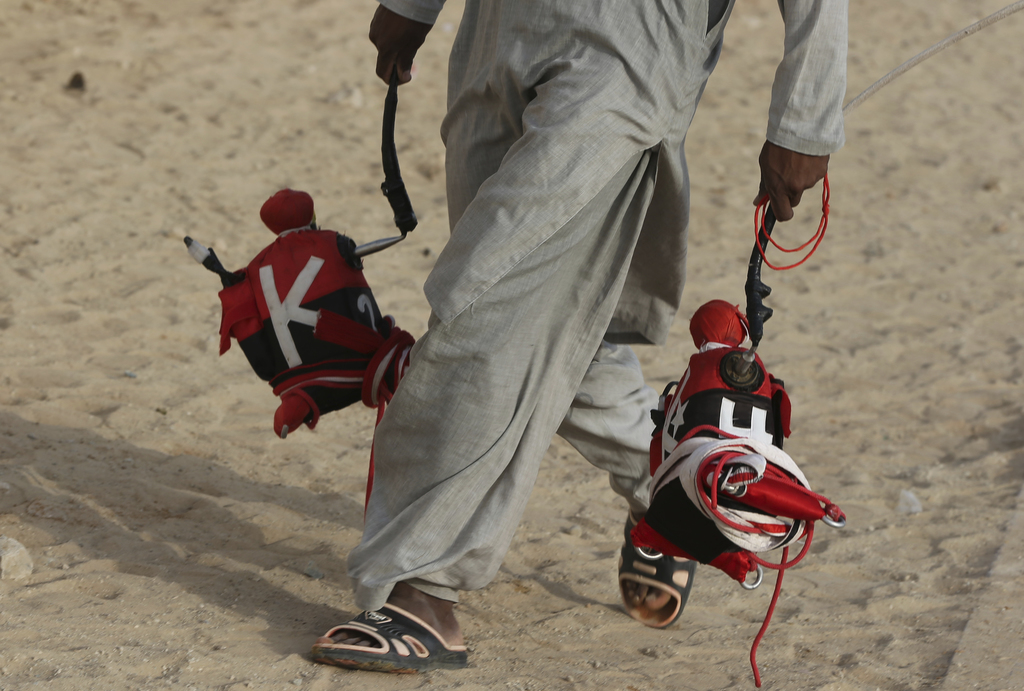 In this Saturday, April 8, 2017 photo, a camel keeper carries robotic  jockeys ahead of a race at the Al Marmoom Camel Racetrack, in al-