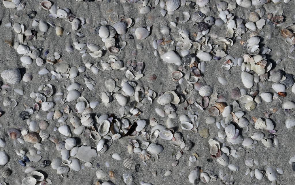 This May 18, 2017 photo sea shells cover Siesta Beach on Siesta Key in Sarasota, Fla. Siesta Beach is No. 1 on the list of best beaches...