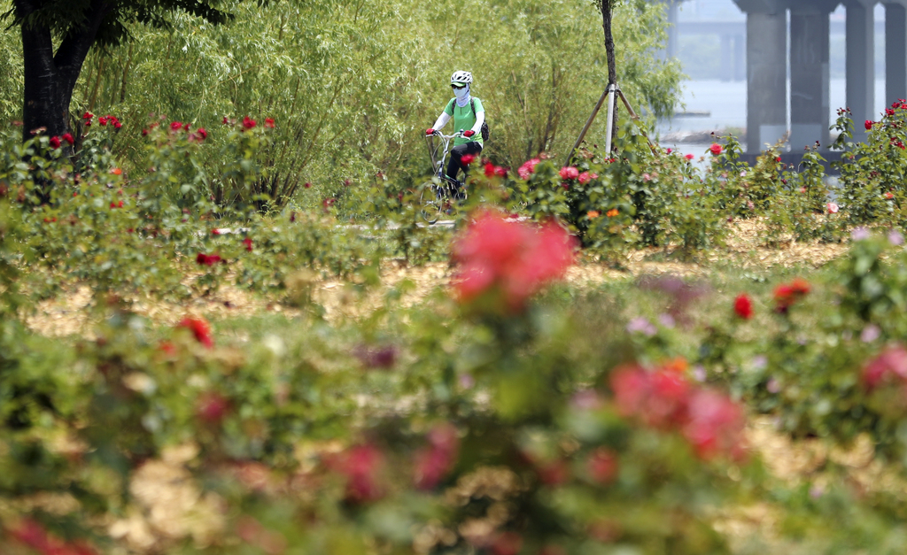 In this June 15, 2017 photo, a visitor rides a bicycle along the Han river in Seoul, South Korea. In a country where bikes are either a...