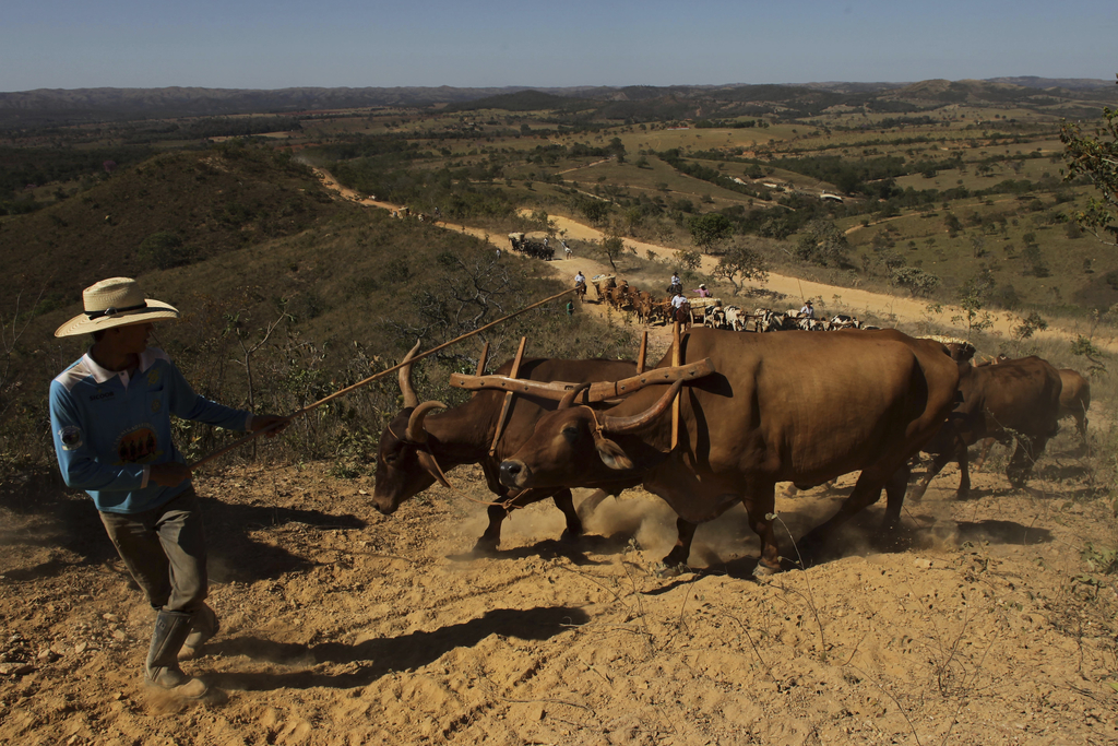 In this July 21, 2017 photo, ox carts climb the Serra da Boa Vista, during the Ox Cart Festival in Vazante, Minas Gerais state, Brazil. The ox carts w...
