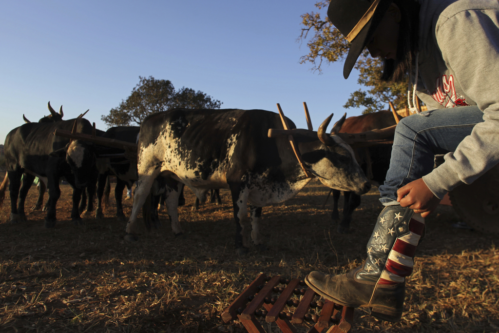 In this July 21, 2017 photo, a cowgirl puts on her boots at sunrise, before the ascent to the Serra da Boa Vista, during the Ox Cart Festival in Vazan...