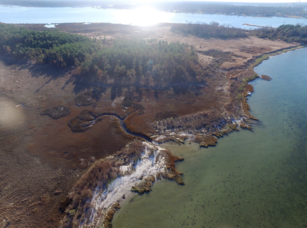 This undated aerial photo provided Matthew Kirwan shows a narrow band of brown pine trees that were killed by October 2015 tidal flooding near Yorktow...