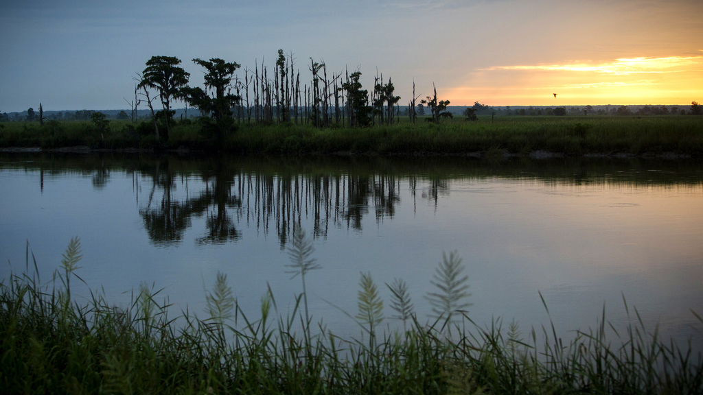 """In this July 16, 2017, photo, the sun rises on a """"ghost forest"""" near the Savannah River in Port Wentworth, Ga. Rising sea levels are killing trees alo..."""