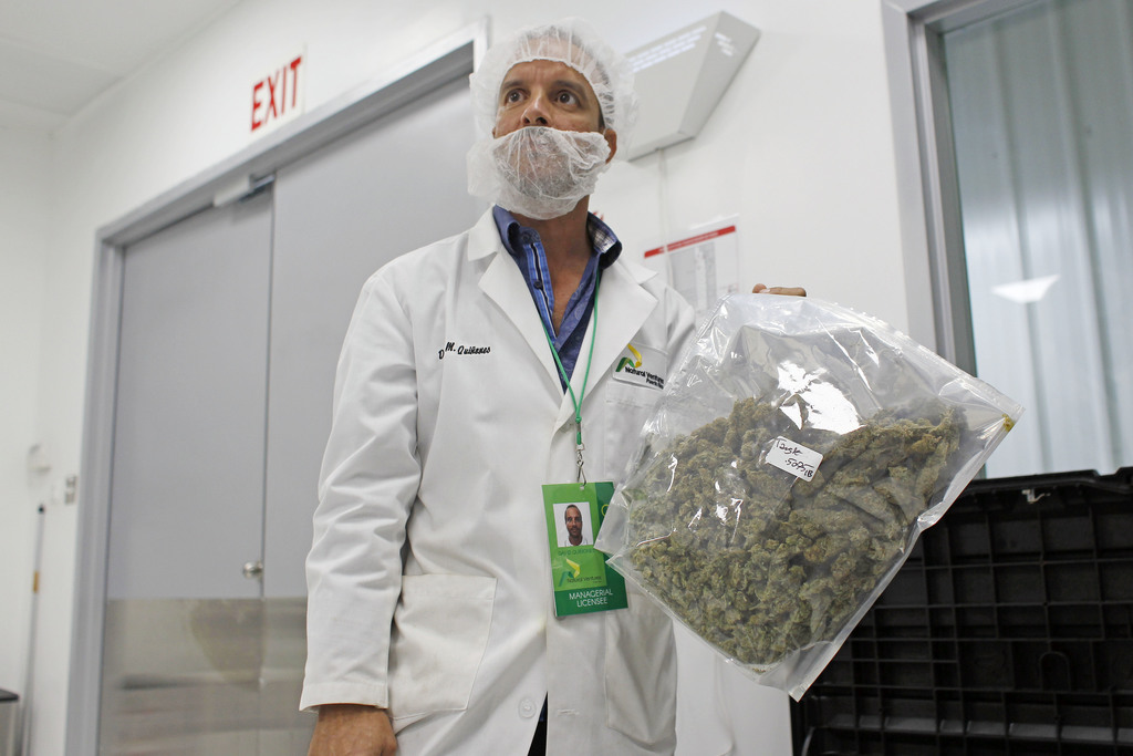 In this July 24, 2017 photo, David Quinones, operations director of Natural Ventures shows a pack of processed marijuana in Caguas, Puerto Rico. Medic...