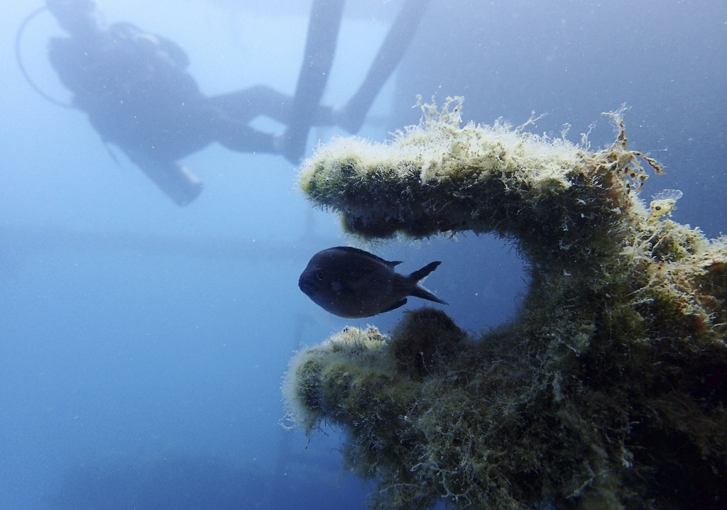 In this Tuesday, July 18, 2017 photo, a fish swims through part of the Italian World War II shipwreck MV Probitas, with Dive Safety Officer Howard Pho...